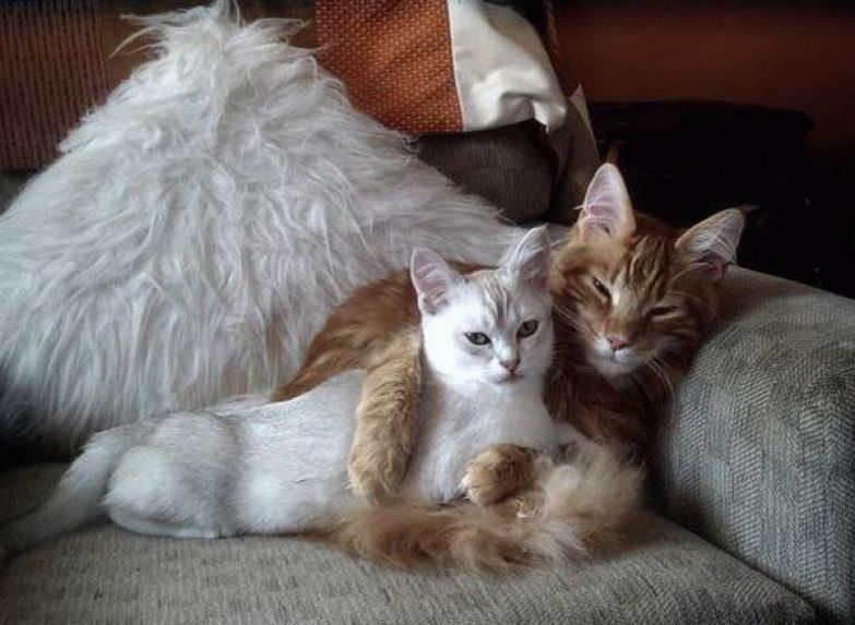 Любовь животных 8