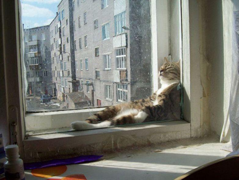 25. На солнышке животные, кошка, сон
