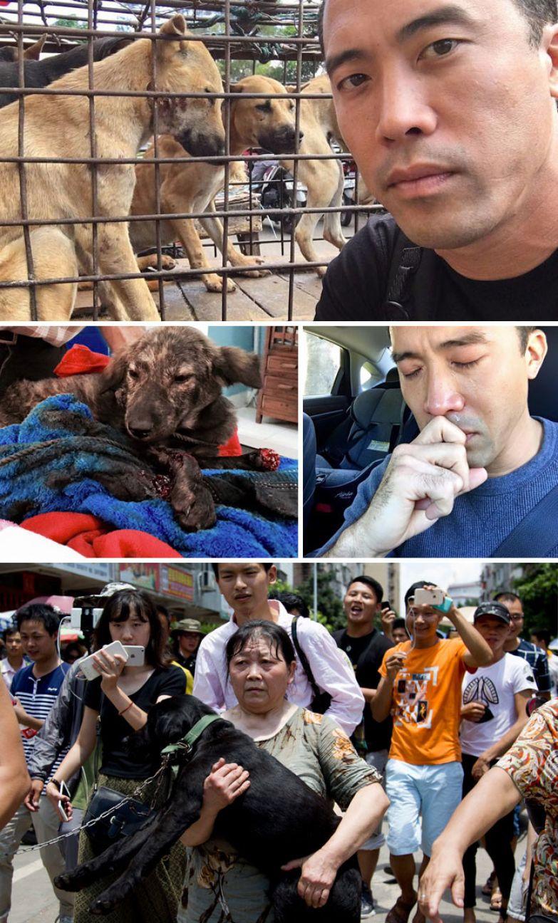 4. Мужчина спас 1000 собак от съедения на китайском фестивале, за что потом был жестоко избит доброта, мир, поступок