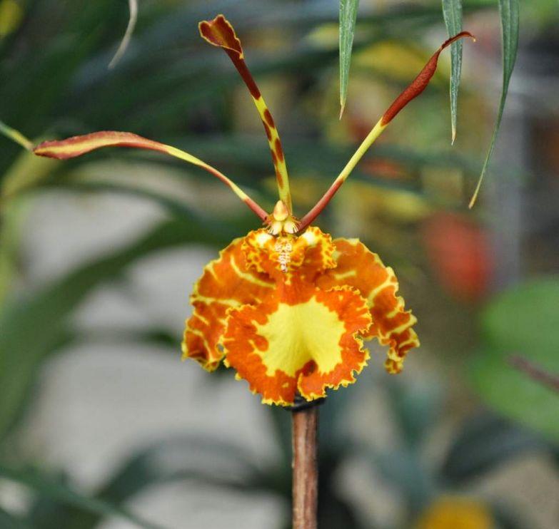 Орхидея 10