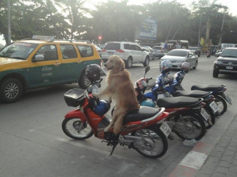 Скутер - по-любому самый удобный вид транспорта! люди, таиланд, юмор