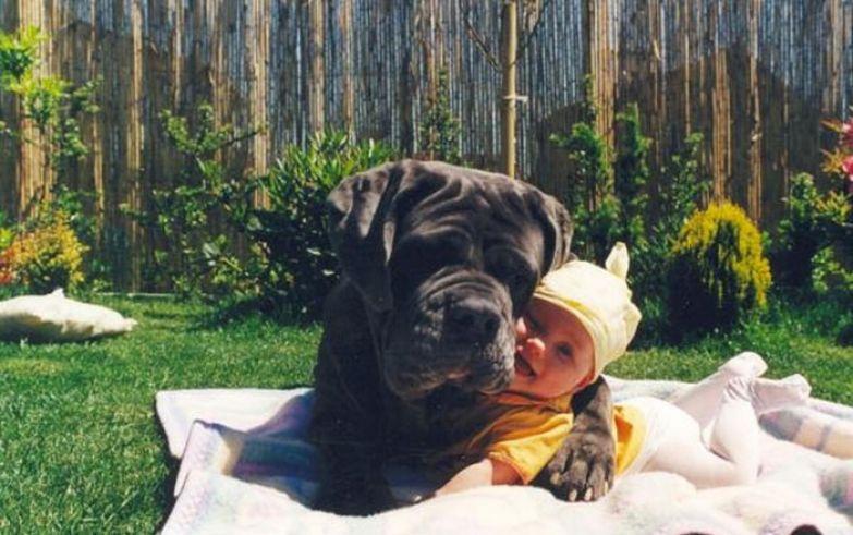 Крупные собаки и дети 15