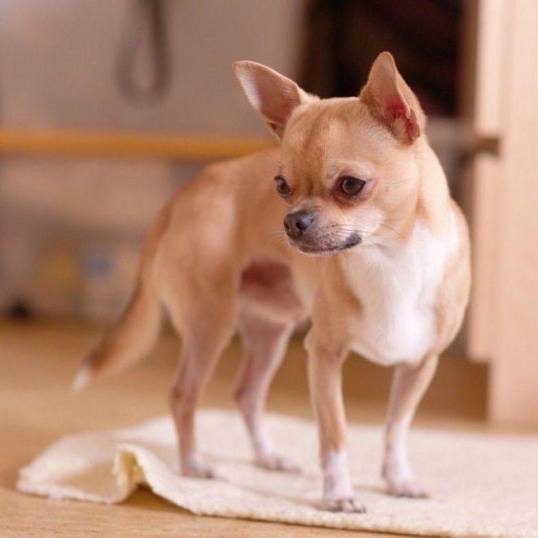рейтинг дрессировки собак