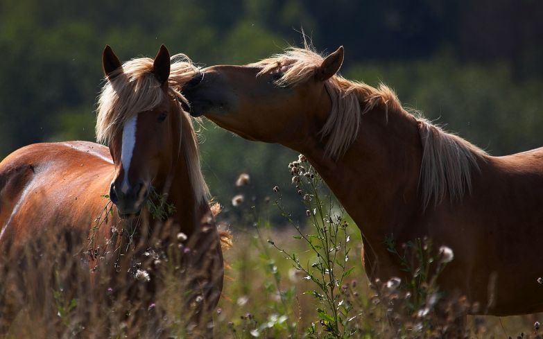 Любовь животных 20