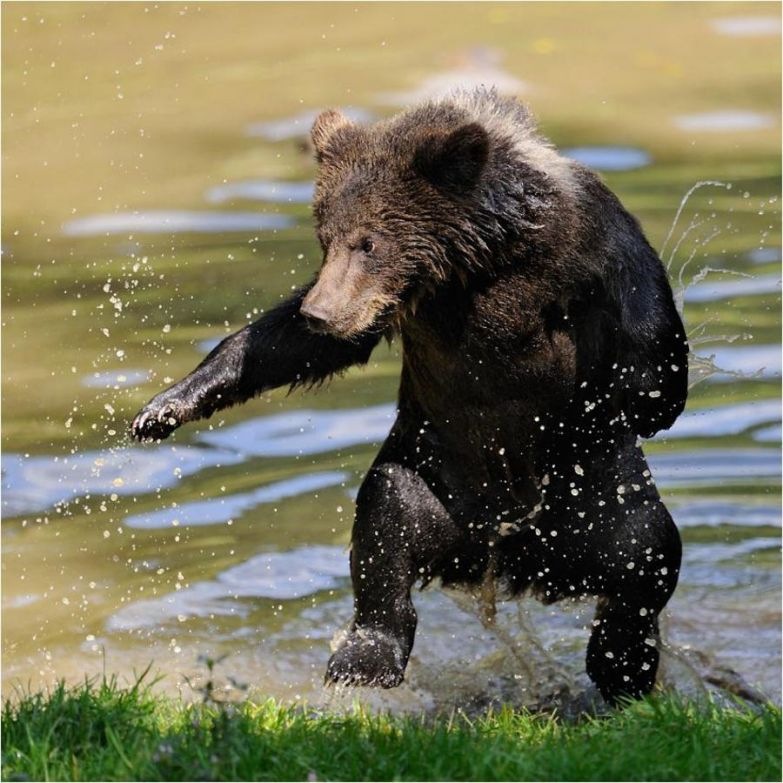 Медведи 14