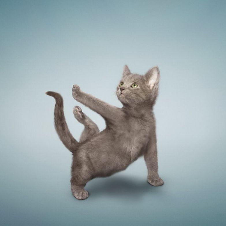 Животные  йога 1
