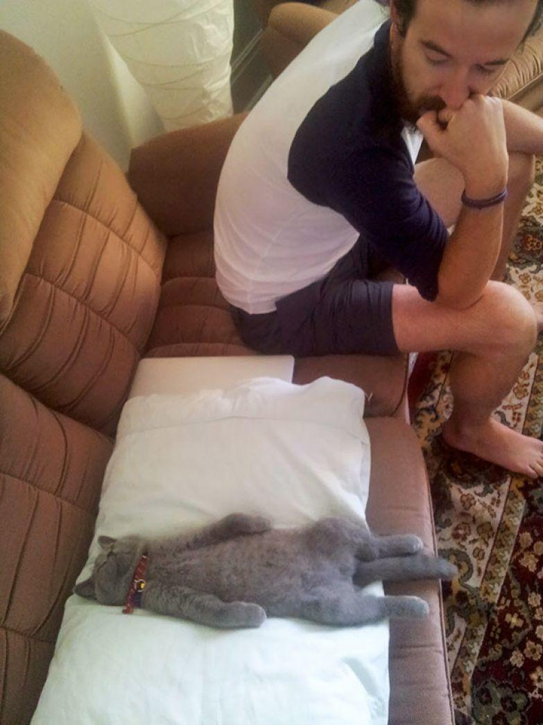 8. Просто отдых животные, кошка, сон