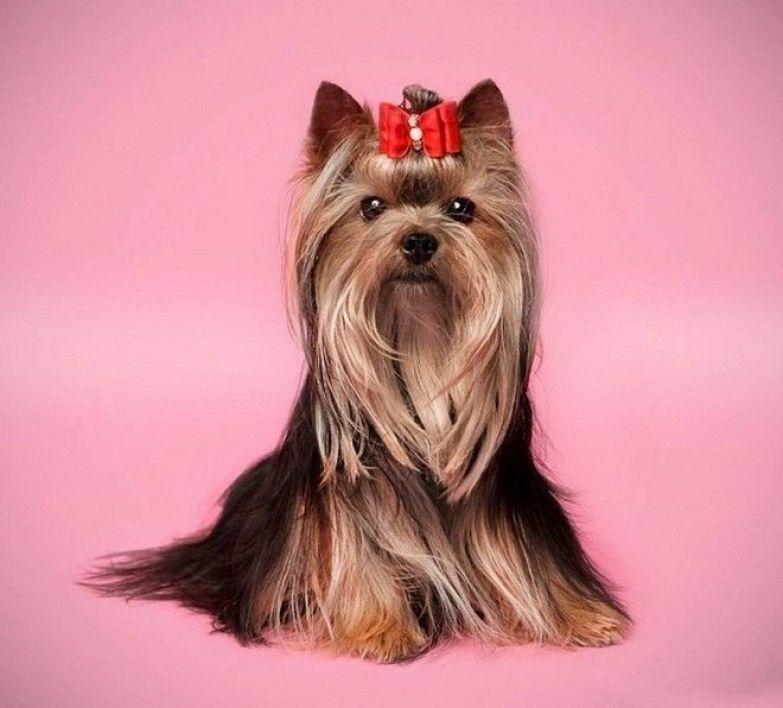 рейтинг собак по уму