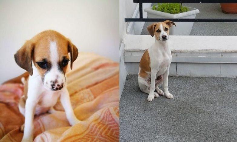 Нео в 2 месяца и в 5 месяцев до и после, животные, любимцы, мило, питомцы, собаки, трогательно, фото
