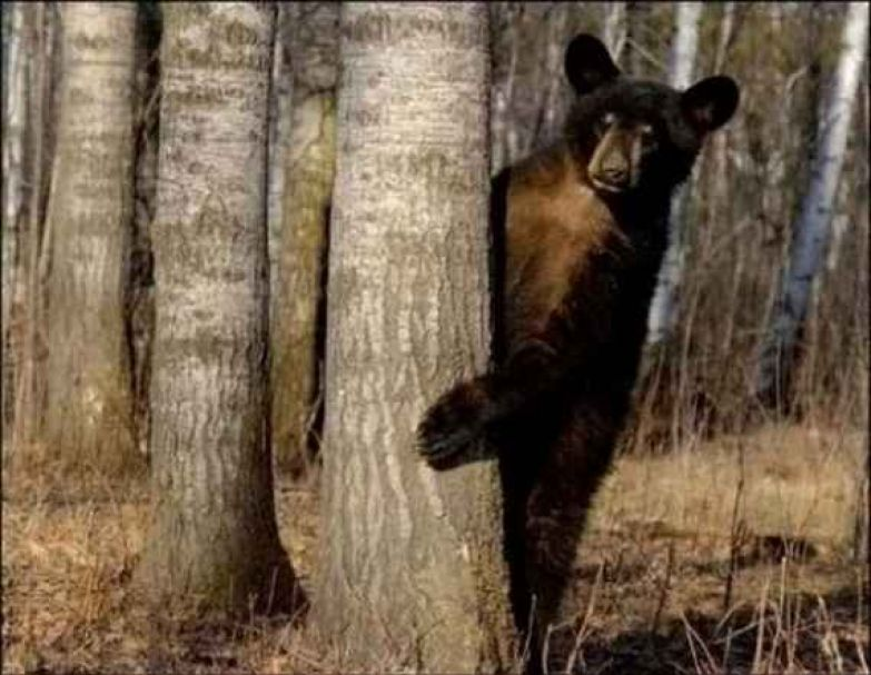Медведи 7