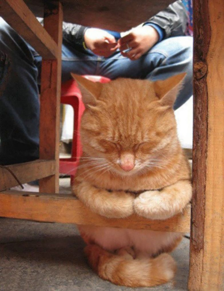 17. Под стулом животные, кошка, сон