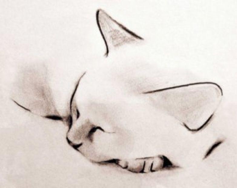 Кошечки 3