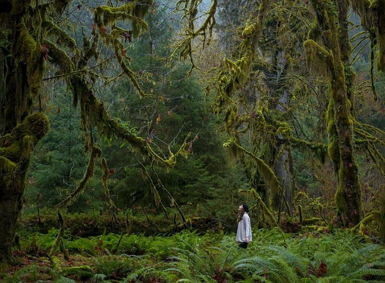 Джастин Джанг. Национальный парк США, расположенный на северо-западе штата Вашингтон.