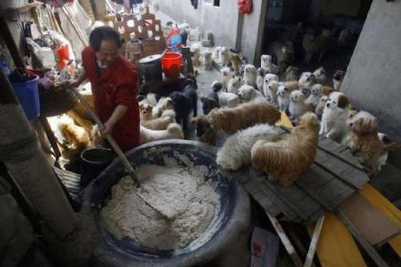 Китайский повар взял под опеку брошенных собак