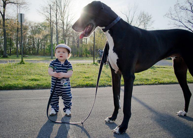 Крупные собаки и дети 3