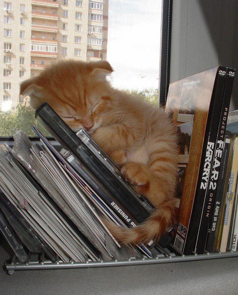 30 фотографий, доказывающих, что коты могут спать где угодно коты, котята, милота, сон