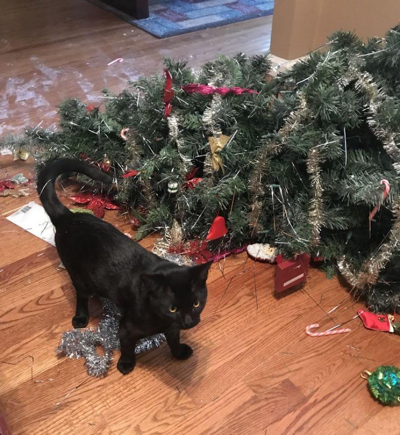 20+ вещей, которые будут понятны только тем, кто делит свою жилплощадь с котом