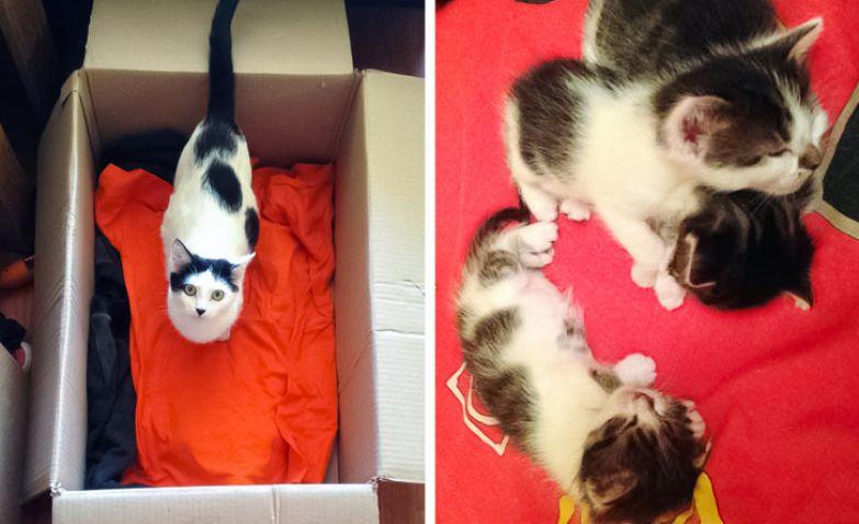 16 человек, которые не хотели котов, но усатые морды решили иначе