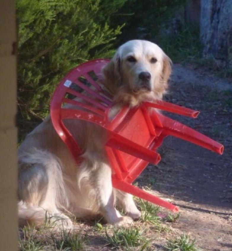 Играл со стулом. Стул победил. животные, застряли, приколы