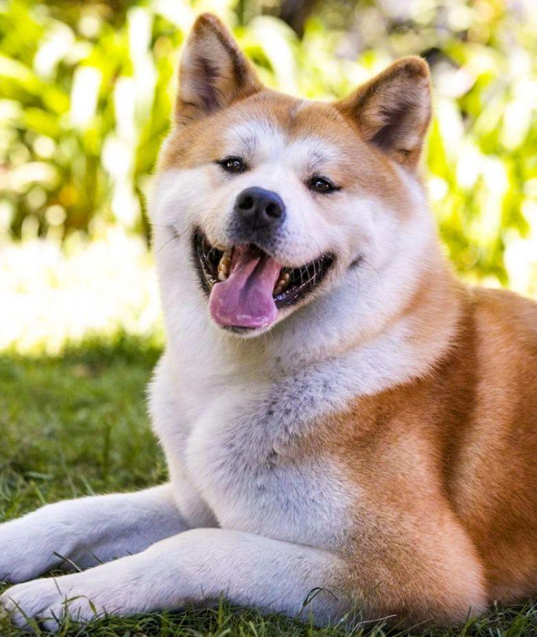 10 милых пород собак, которых не стоит заводить семье с детьми