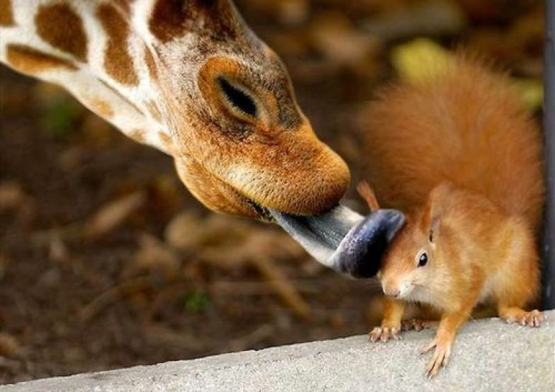 Любовь животных 7