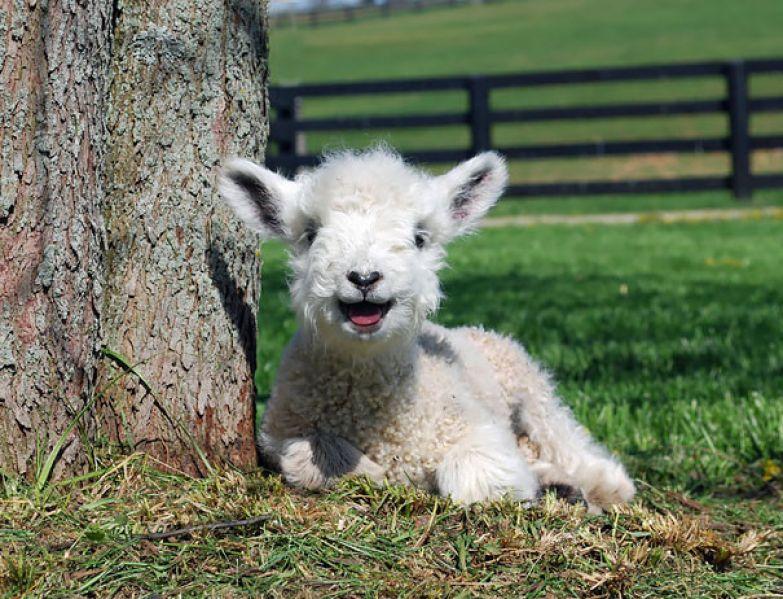 5. животное, улыбка