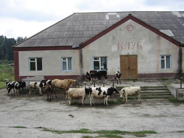 Тёлочки знают, куда идти) деревня, дискотека, клуб, прикол, село