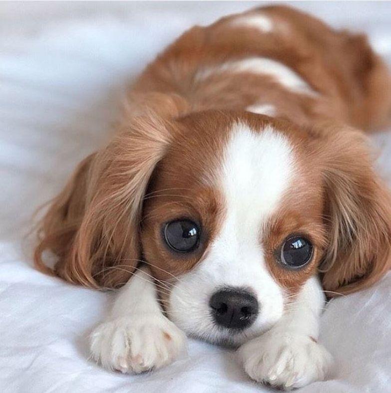 15+ фото животных, на которые надо смотреть вместо приема антидепрессантов