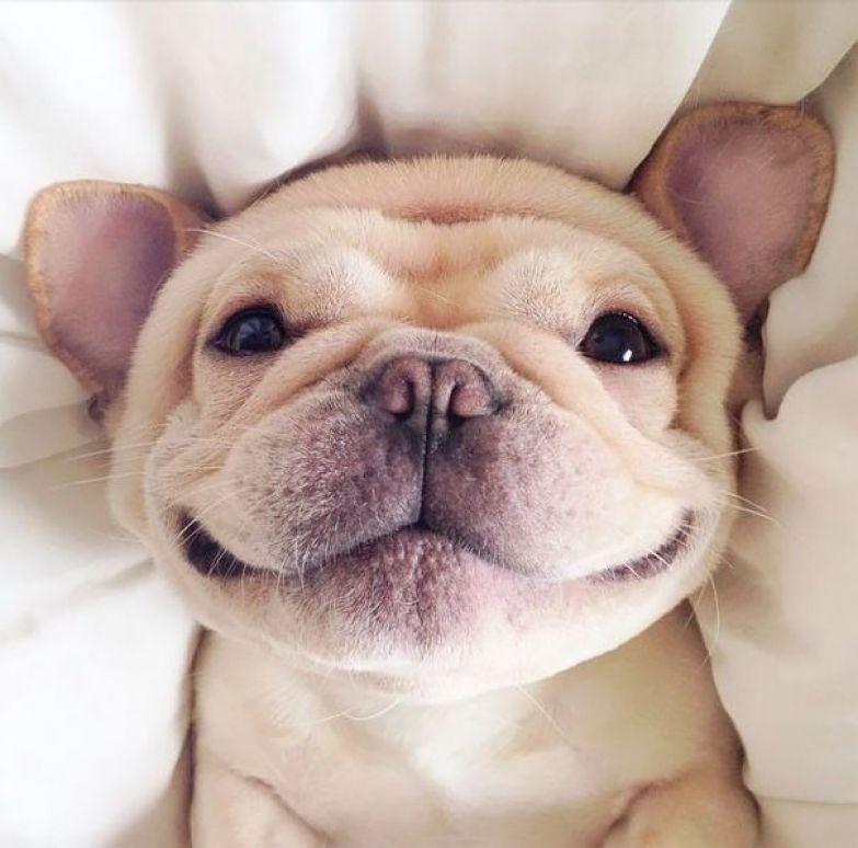20. животное, улыбка
