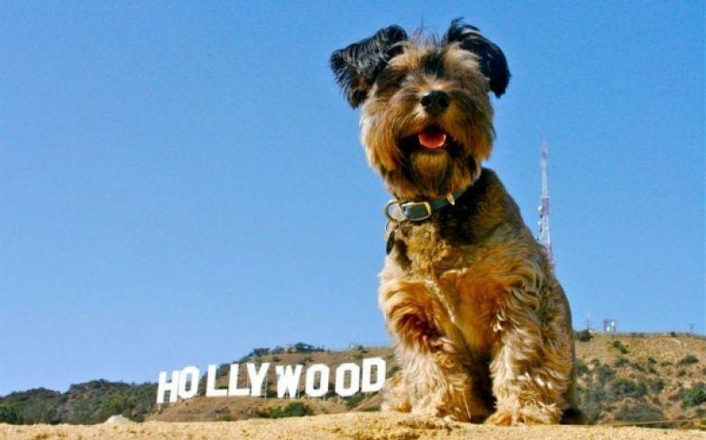 Оскар в Голливуде