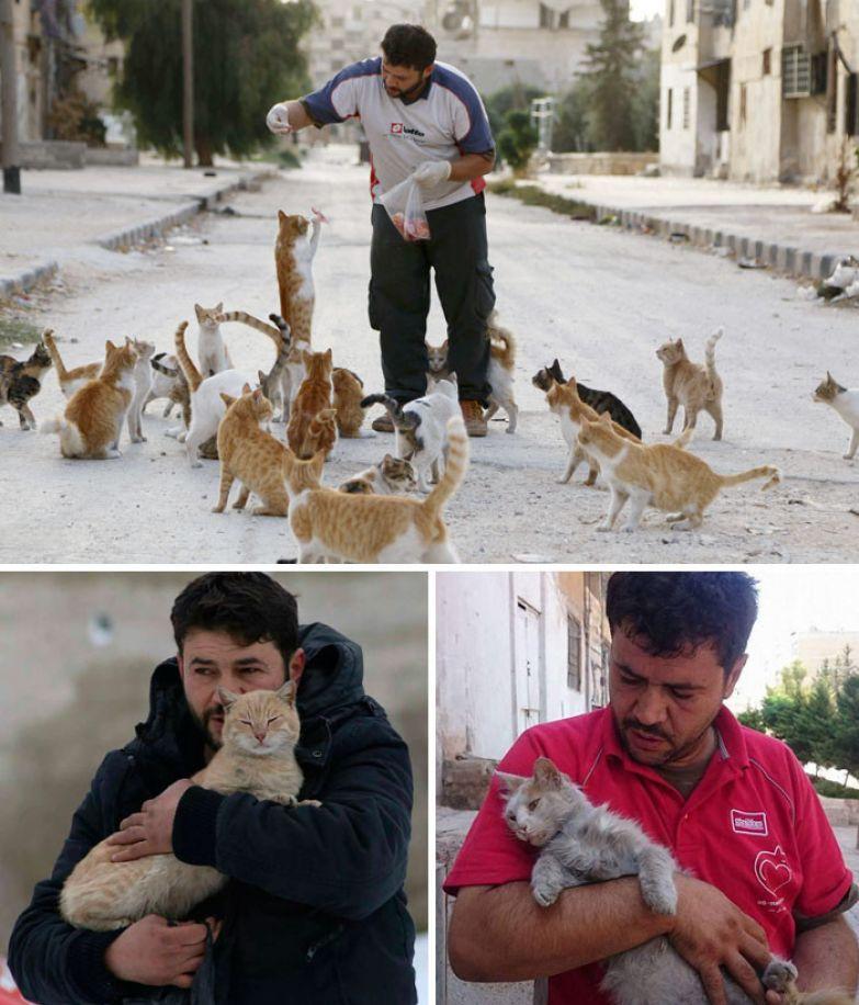 2. Сириец каждый день кормит бездомных кошек в охваченном войной Алеппо доброта, мир, поступок