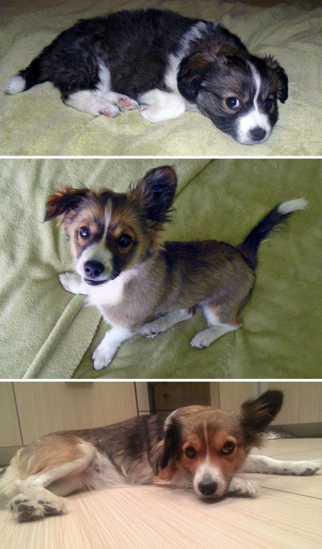 """""""Я назвал свою собаку Пончиком, потому что она была очень толстеньким щенком. Но сейчас она - стройная леди"""" до и после, животные, любимцы, мило, питомцы, собаки, трогательно, фото"""