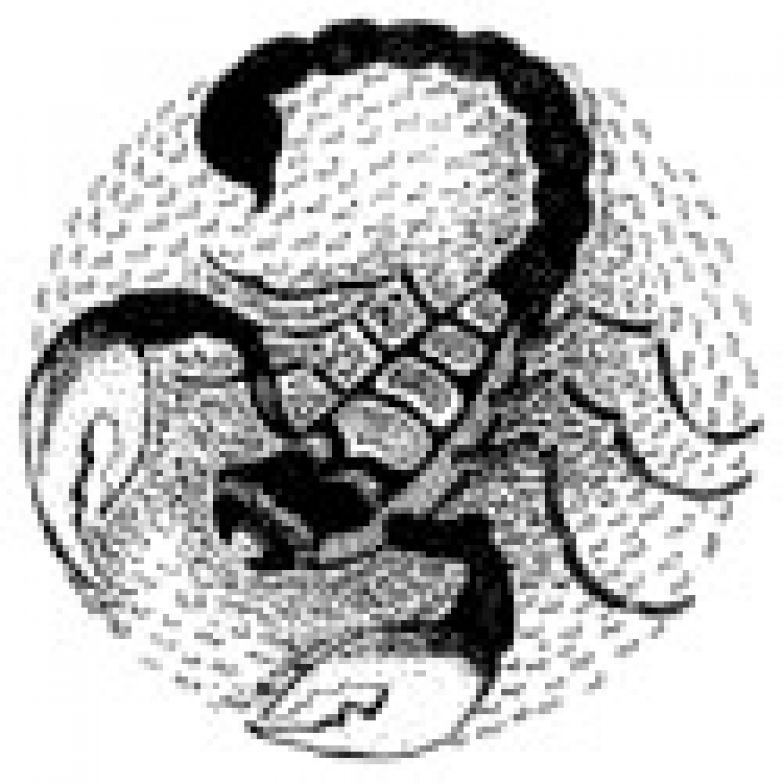 перед знаком скорпионом что