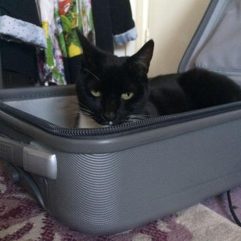 3. Попытка собрать чемодан жизнь, кошка, ситуация
