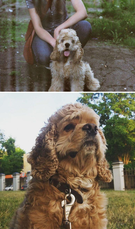 7 месяцев и 7 лет - а по характеру такой же весельчак! до и после, животные, любимцы, мило, питомцы, собаки, трогательно, фото