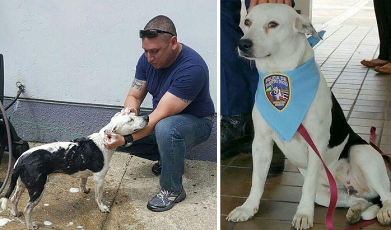 39. Бездомный пес, которого приняли на службу в полиции доброта, мир, поступок