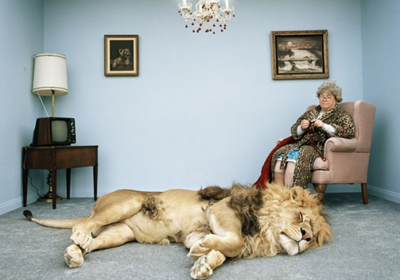 Львы в домашних условиях 21
