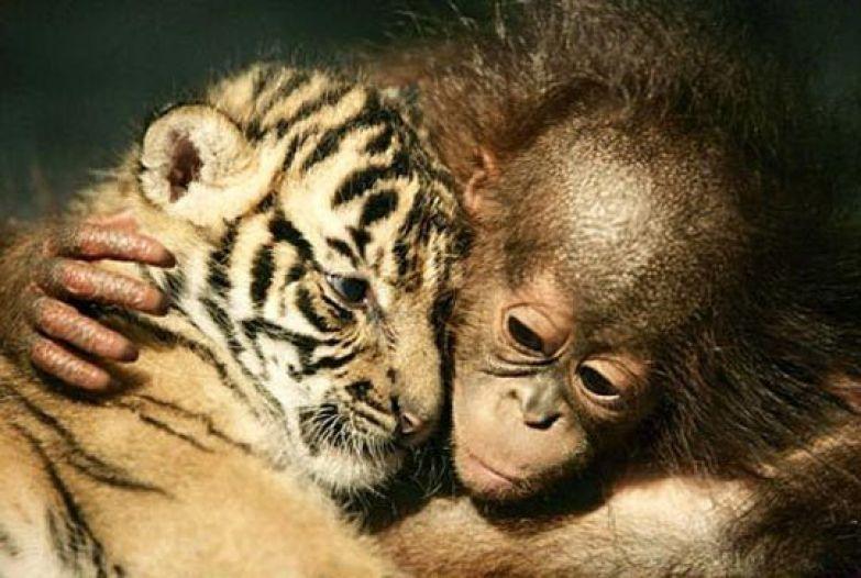 Любовь животных 5