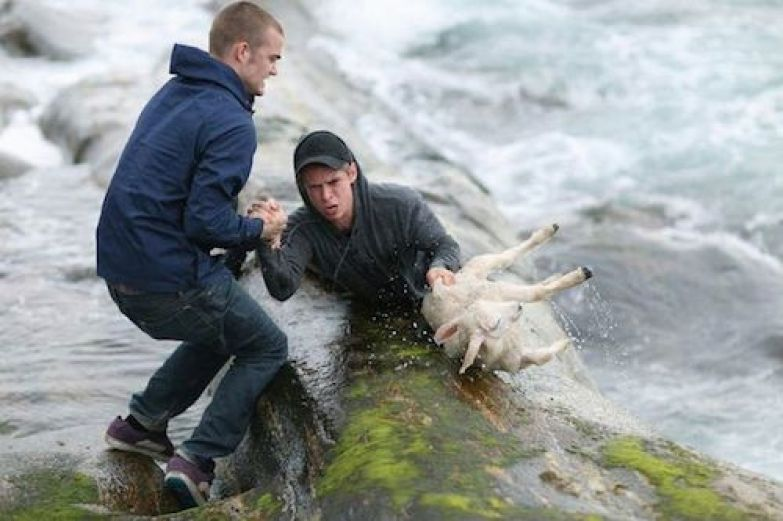 Спасение олененка