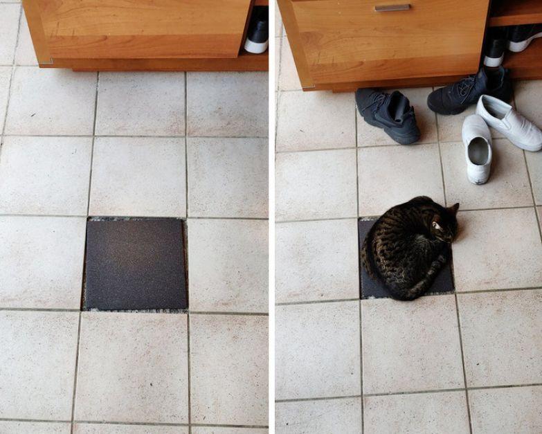 20+ особенностей кошек, которыми не могут похвастать другие животные