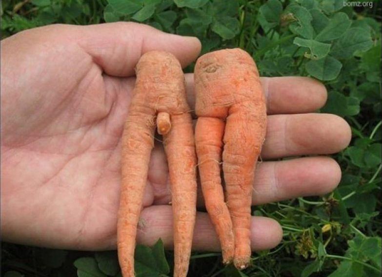 Любовь морковь 4