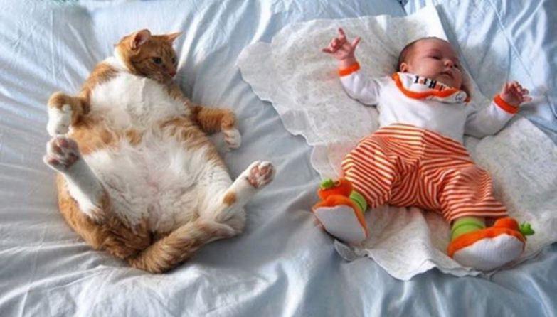 12. Повторюшка кот, малыш, очарование