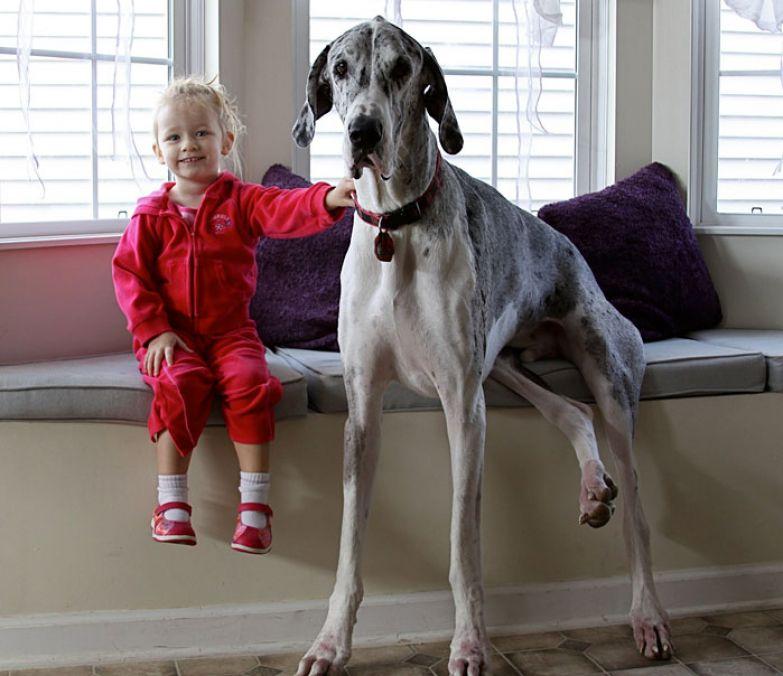 Крупные собаки и дети 14