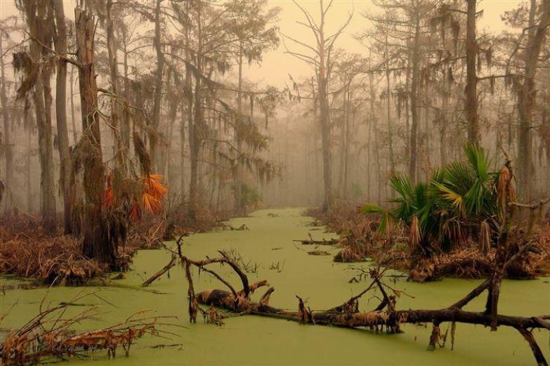16. Лес в штате Луизиана, США люди, мир, фотоподборка