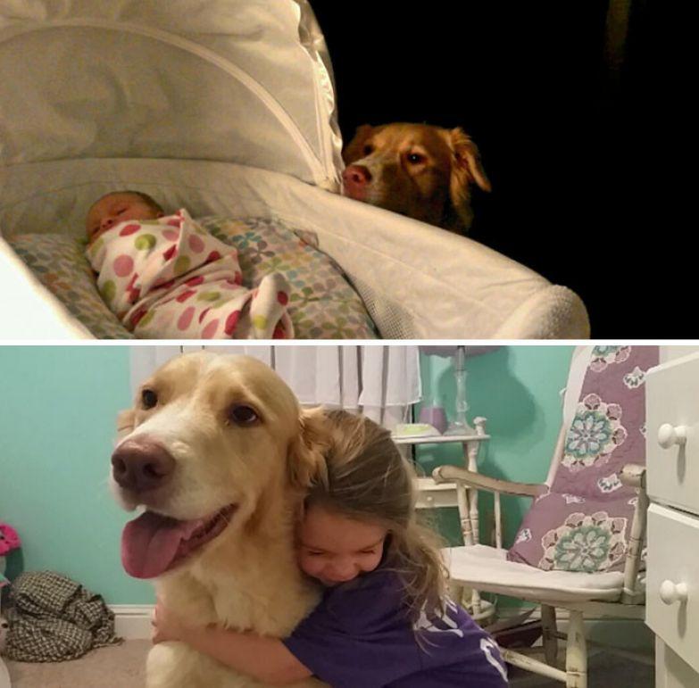 Три года дружбы до и после, друзья, собаки, фото