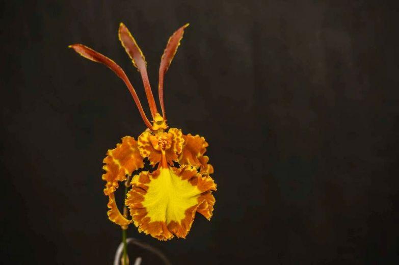 Орхидея 4