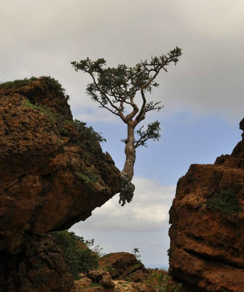 This Tree Is Tenacious