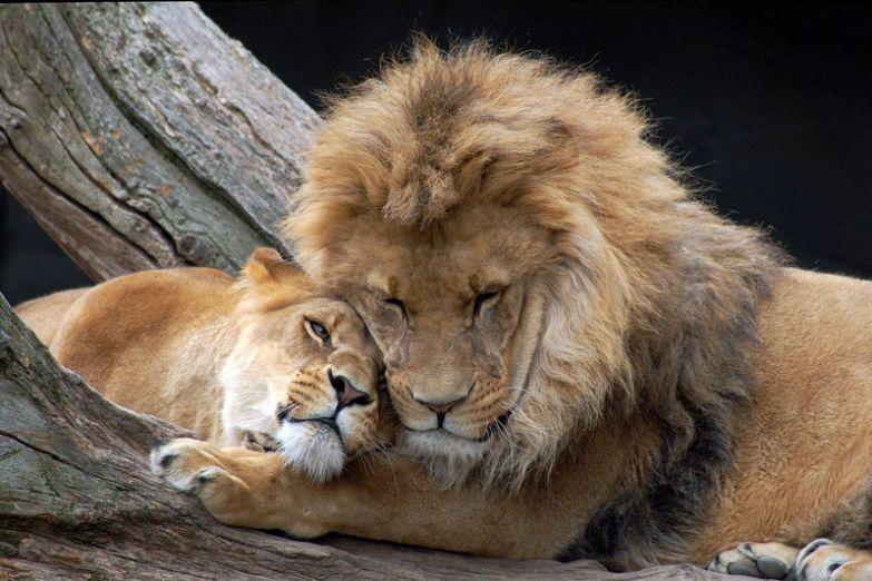 Любовь животных 4