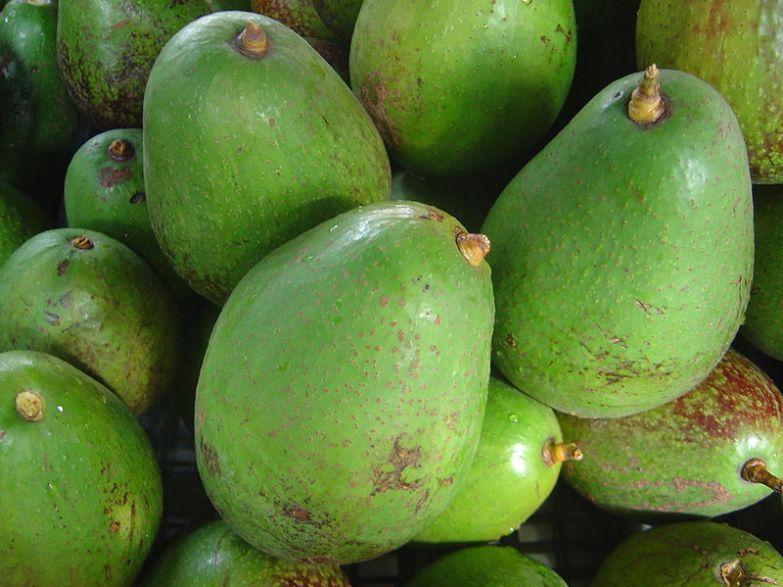 свойства косточки авокадо