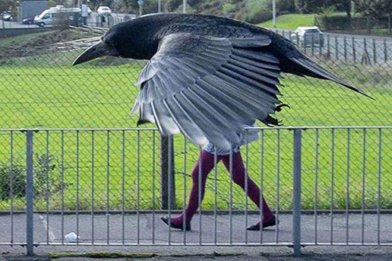 птица с ногами